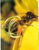 Images doc 3 de 03.1989_60.000 abeilles dans une ruche - URL