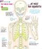 Images doc 237 de 09.2008_Voici ton squelette - URL